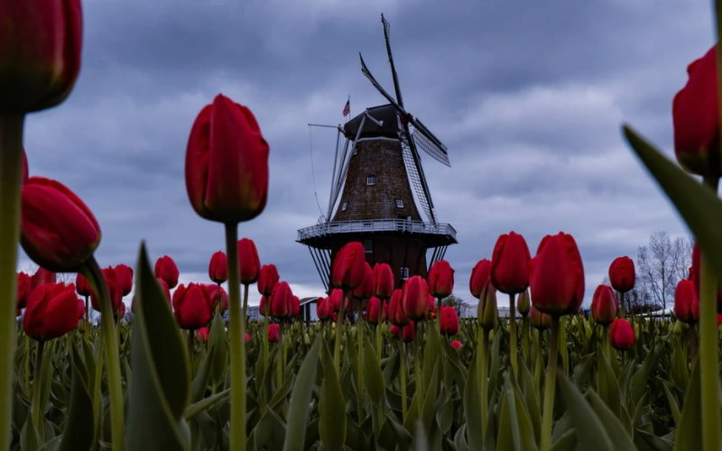 How Did The Dutch Influence American Towns - Holland