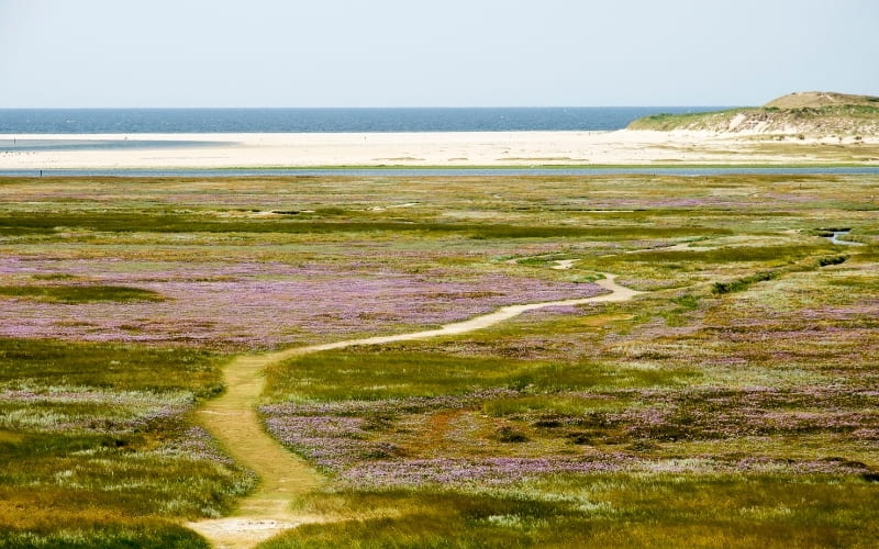 Visiting Texel Island - High angle view of Slufter area on Texel