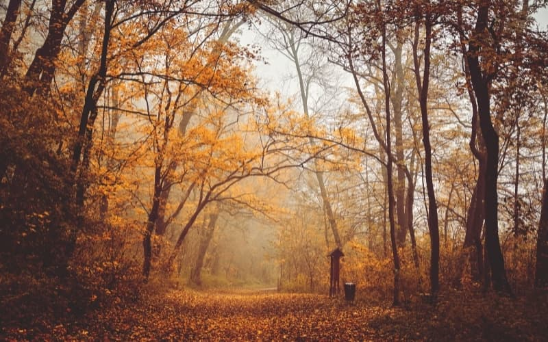 What are the Seasons in The Netherlands - Dutch forest during autumn