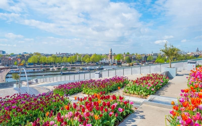 Why does the Netherlands grow tulips - Amsterdam tulip festival