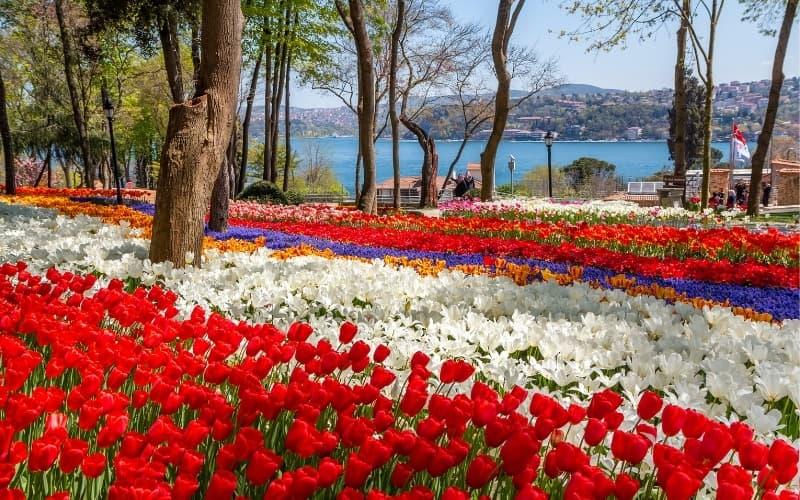 Tulips in a park in Turkey